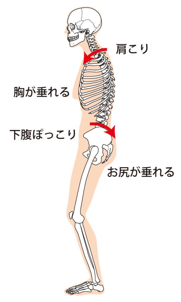 猫背の原因は骨盤にある