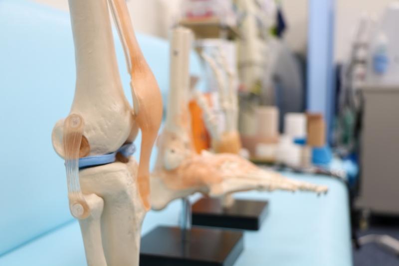 太腿の大きな筋肉「大腿四頭筋」